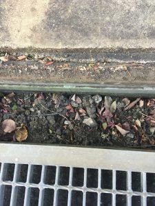 雨樋下の排水溝の土を採取